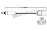 250-23502 Catalytic Converters Detail